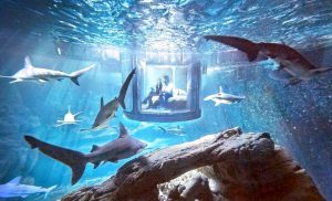 Парижский океанариум - Ночь с акулами